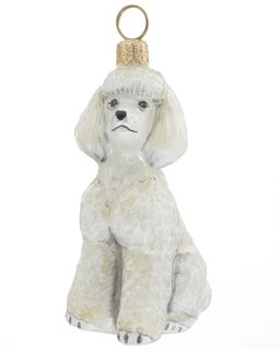 Toy Poodle - White