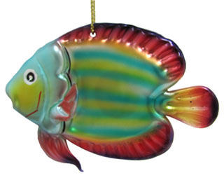 Tropical Fish - Tang