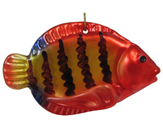 Tropical Fish - Flame Angelfish